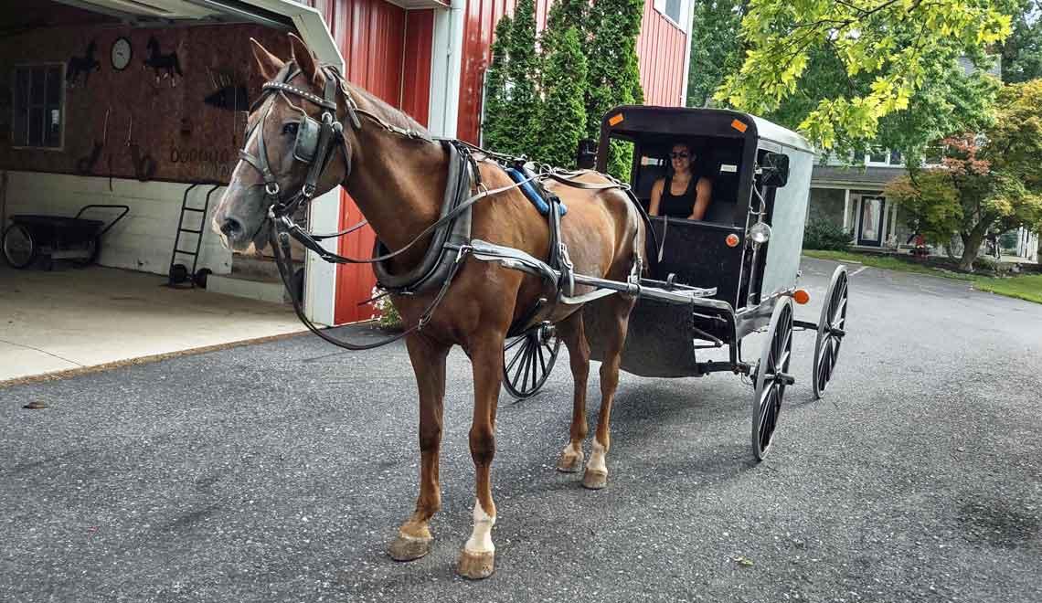 buggy ride at the Amish Homestay