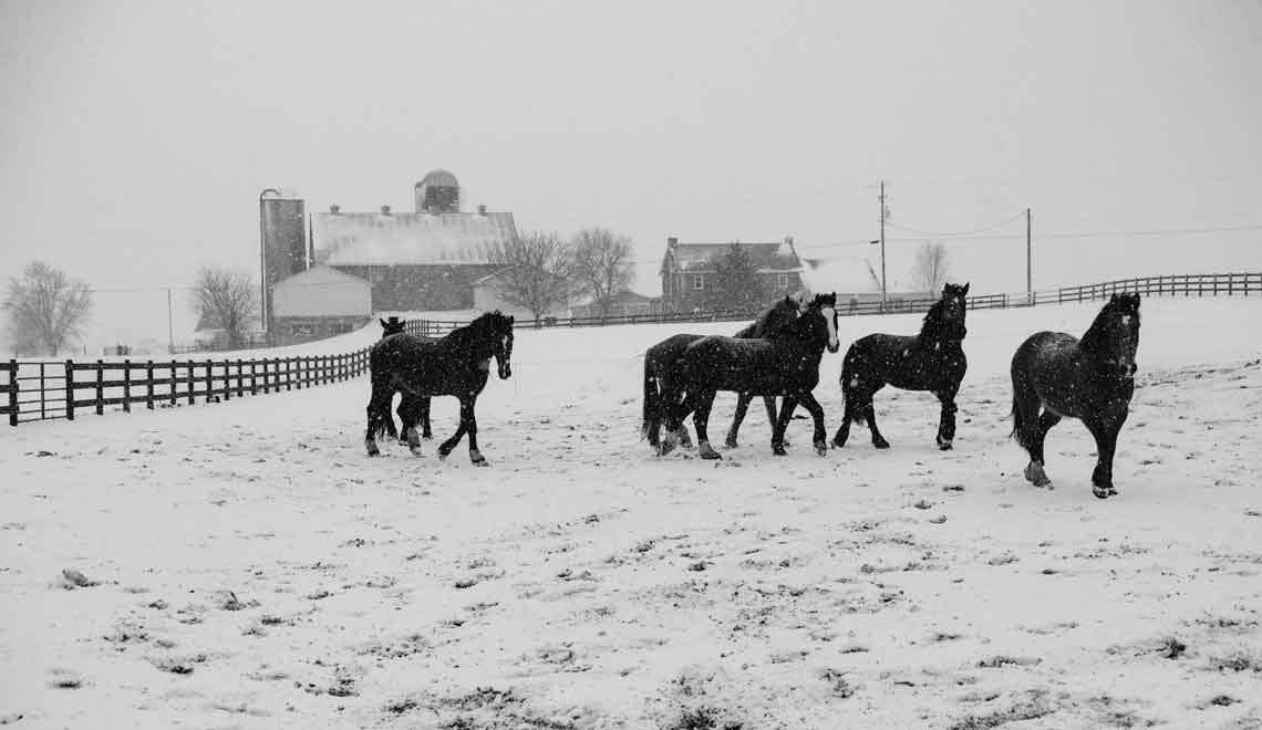 horses in winter