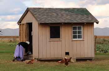 chicken coop at the Amishtown Farm Guesthouse