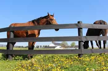 Pleasant View Farm Guesthouse - Amish Farm Stay