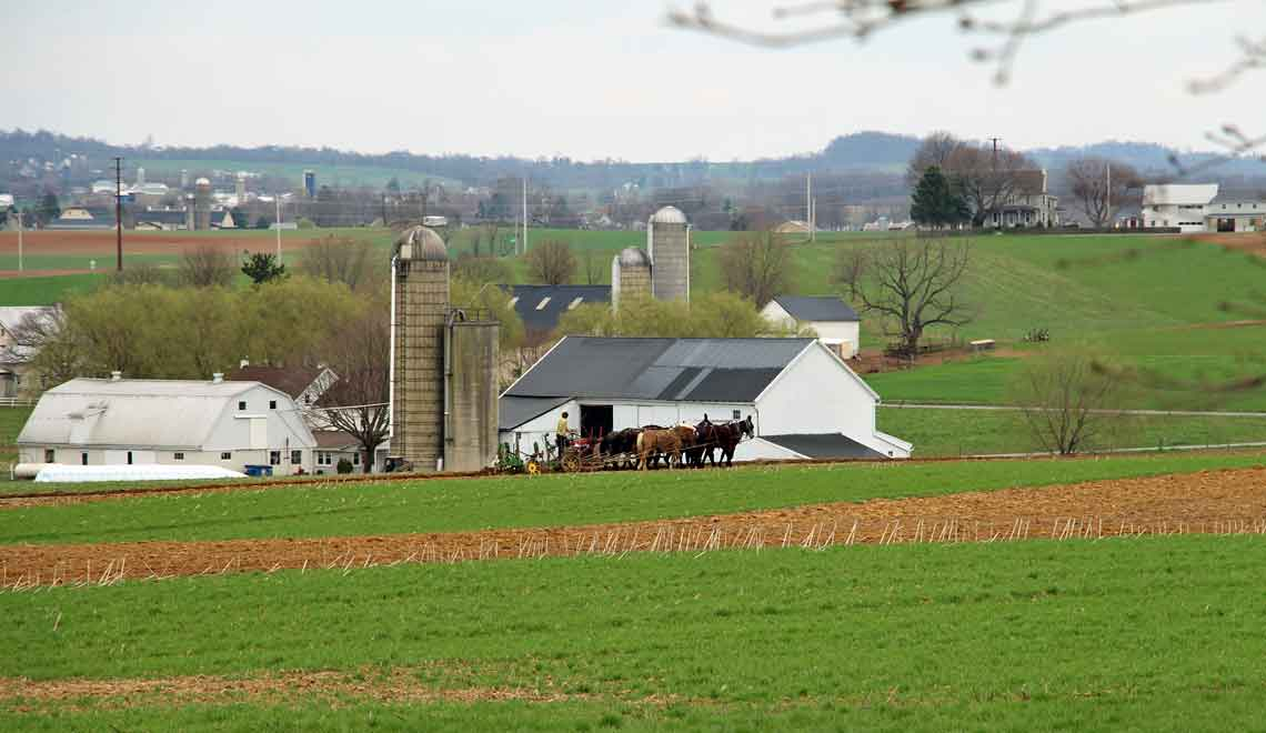 Amish farming across the road